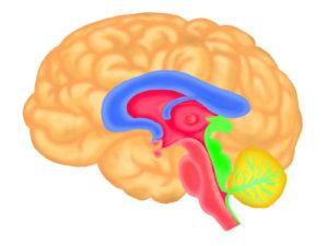 脳二重構造